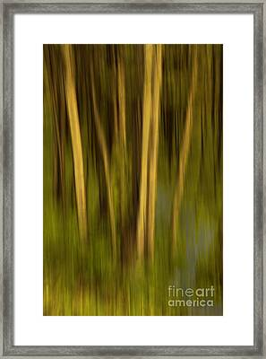 Woodland Tapestry Framed Print