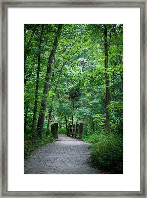 Framed Print featuring the photograph Woodland Trail by Wayne Meyer