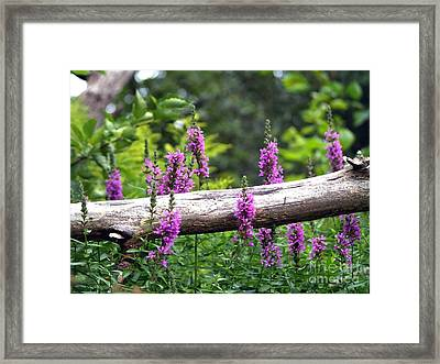 Woodland Treasures Framed Print