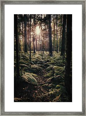 Woodland Trees Framed Print by Amanda Elwell