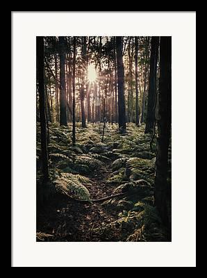 Forest Floor Framed Prints