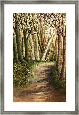 Woodland Walk Framed Print