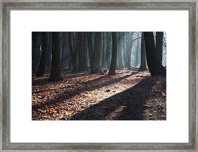 Woodland Walk Framed Print by Mike Allison