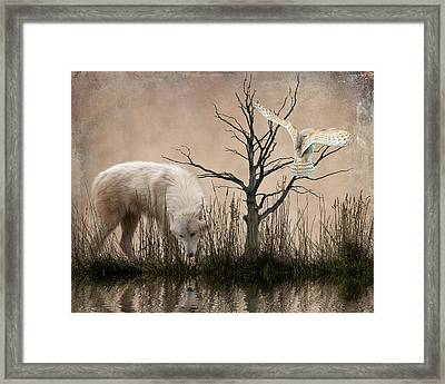 Woodland Wolf Reflected Framed Print by Sharon Lisa Clarke