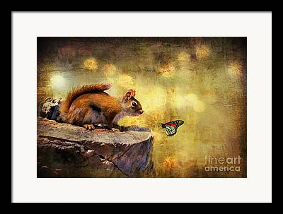 Animal Encounters Framed Prints