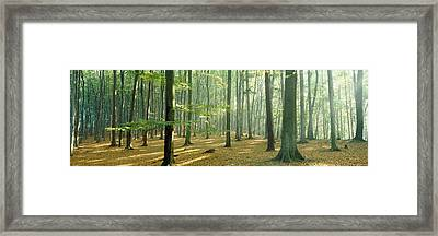Woodlands Near Annweiler Germany Framed Print by Panoramic Images