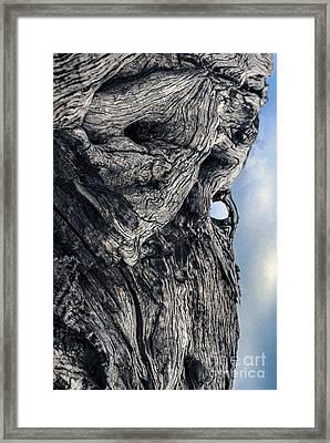 Woodman Framed Print by Petros Yiannakas