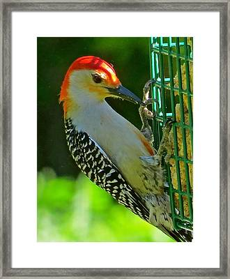 Woodpecker 102 Framed Print by Patsy Pratt