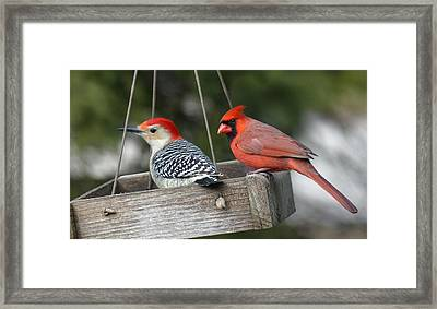 Woodpecker And Cardinal Framed Print by John Kunze