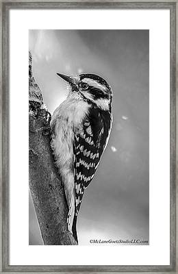 Woodpecker Black And White Framed Print