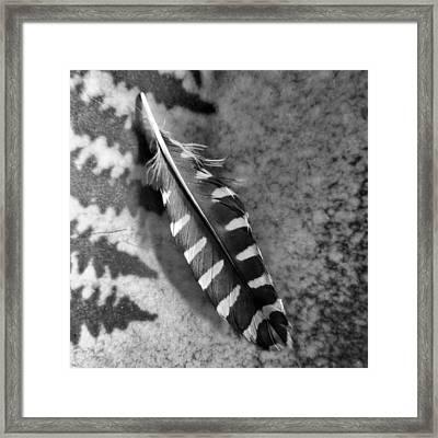 Woodpecker Feather Framed Print