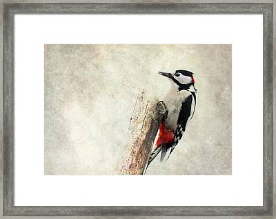 Woodpecker In Nature Framed Print