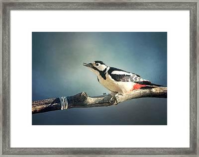 Woodpecker In Summer Framed Print