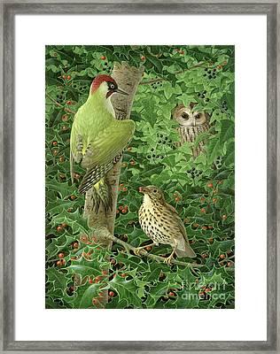Woodpecker Owl And Thrush  Framed Print