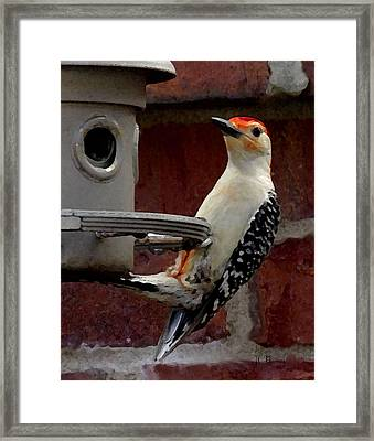 Framed Print featuring the photograph Woodpecker Red Bellied by James C Thomas