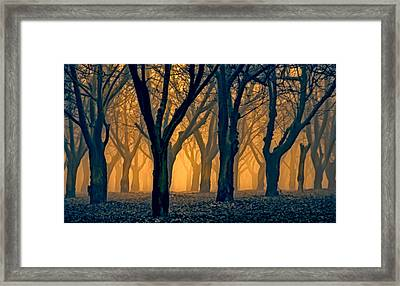 Woods Aglow Framed Print by Don Schwartz