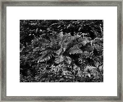 Wood's Ferns  Framed Print