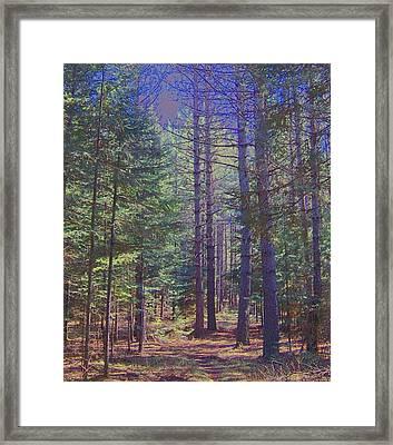 Woods II Framed Print