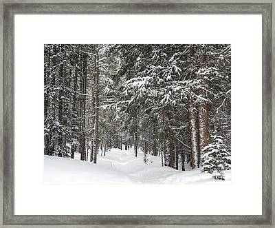 Woods In Winter Framed Print