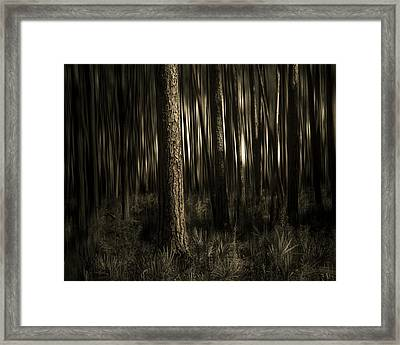 Woods Framed Print by Mario Celzner