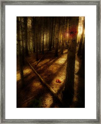 Woods With Pine Cones Framed Print by Meirion Matthias