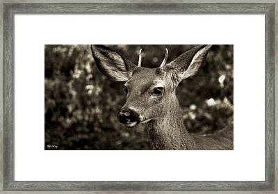 Woodside Deer Framed Print by Alex King