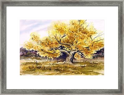 Woodward Cottonwood Framed Print by Sam Sidders