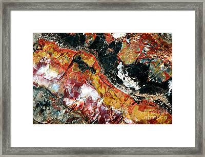 Woody Patterns Framed Print