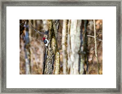 Framed Print featuring the photograph Woody by Sennie Pierson