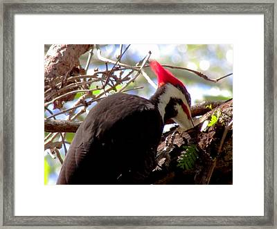 Woody  Framed Print by Will Boutin Photos