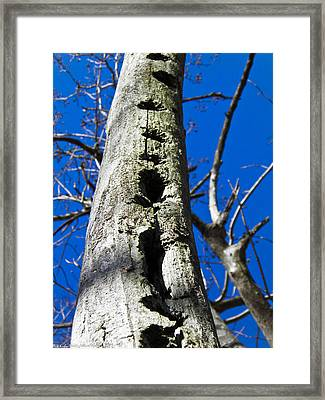 Framed Print featuring the photograph Woody's Paradise by Nick Kirby