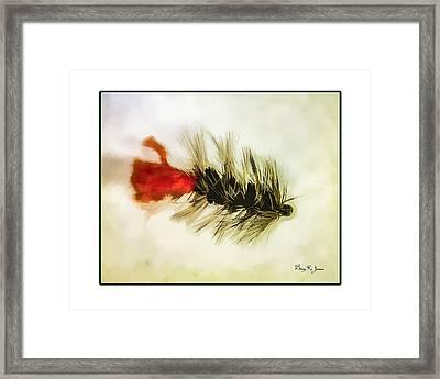Fly Fishing - Woolly Bugger Framed Print