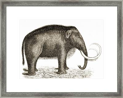 Woolly Mammoth Framed Print by British Library