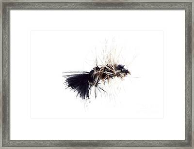 Framed Print featuring the photograph Wooly Bugger by Lawrence Burry
