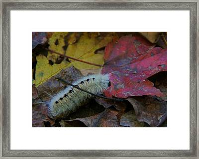 Wooly Framed Print by Doug Hubbard