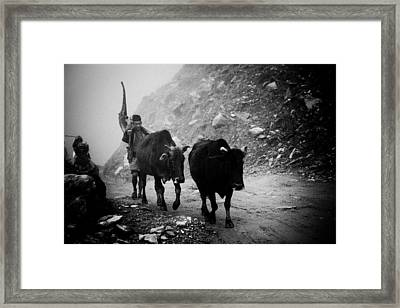 Work Hard Tamang People Langtang Nepal Framed Print by Raimond Klavins