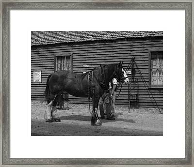 Work Horse Framed Print
