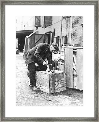 Worker Nailing Boxes Framed Print by Underwood Archives