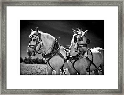 Workhorses Framed Print