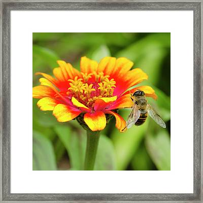 Working Bee Framed Print