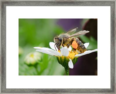 Working Bee Framed Print by Ivelin Donchev
