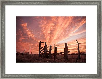 Working Cattle/ End Of Day Framed Print by Shirley Heier