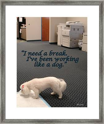 Working Dog Framed Print by Mary Beth Landis