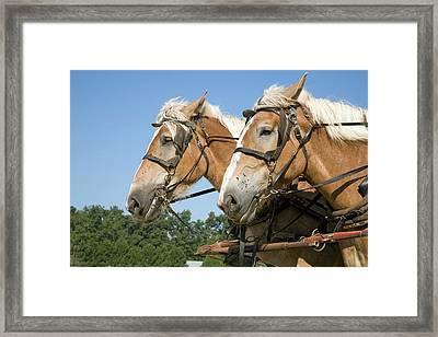 Working Farm Horses Framed Print by Jim West