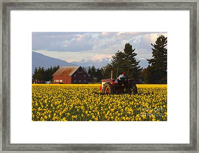 Working Gold Framed Print by Mike  Dawson