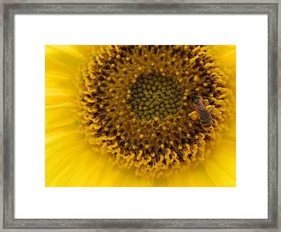 Working Honey Bee Framed Print
