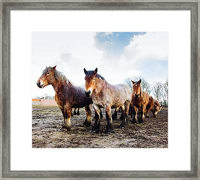 Working Horses Framed Print by Pati Photography
