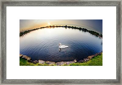World Of A Swan Framed Print by Vicki Jauron