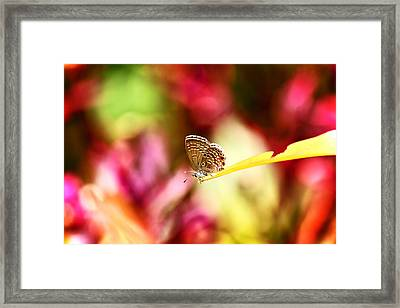 World Of Confusion Framed Print
