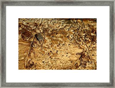 Framed Print featuring the photograph Worm Wood - 1 by Kenny Glotfelty